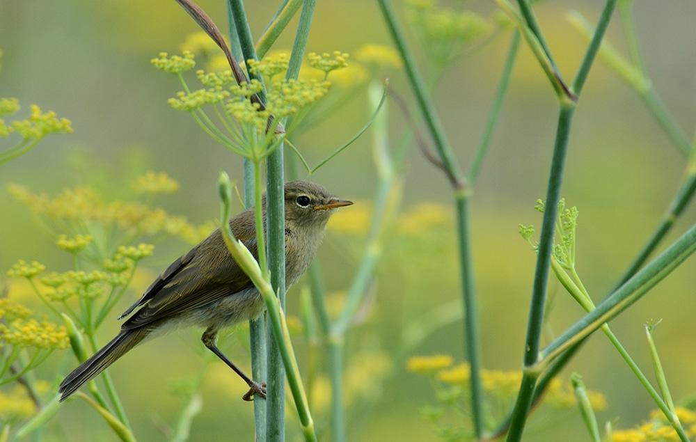 A l\'écoute des chants d\'oiseaux sur l\'île de Boede - Ville de Séné
